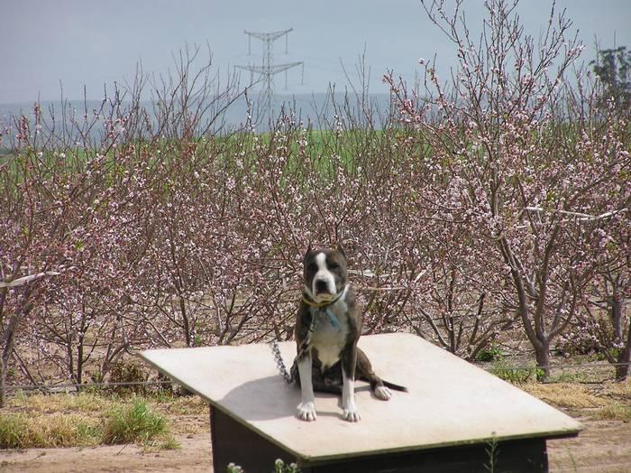 פרוייקט הצלת חמורים וכלבים